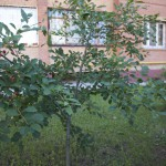 Ул. Дружбы, дом 5