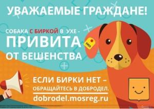 Info-o-sobake-s-birkoj-1024x724